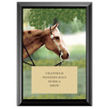 Western Full Color Plaque - Black 